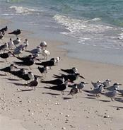 Birds on the Beach. - Single Family Home for sale at 540 N Gulf Blvd, Placida, FL 33946 - MLS Number is D6110801