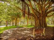 Banyan tree - Vacant Land for sale at 305 Ponce De Leon Ave, Venice, FL 34285 - MLS Number is N6111554